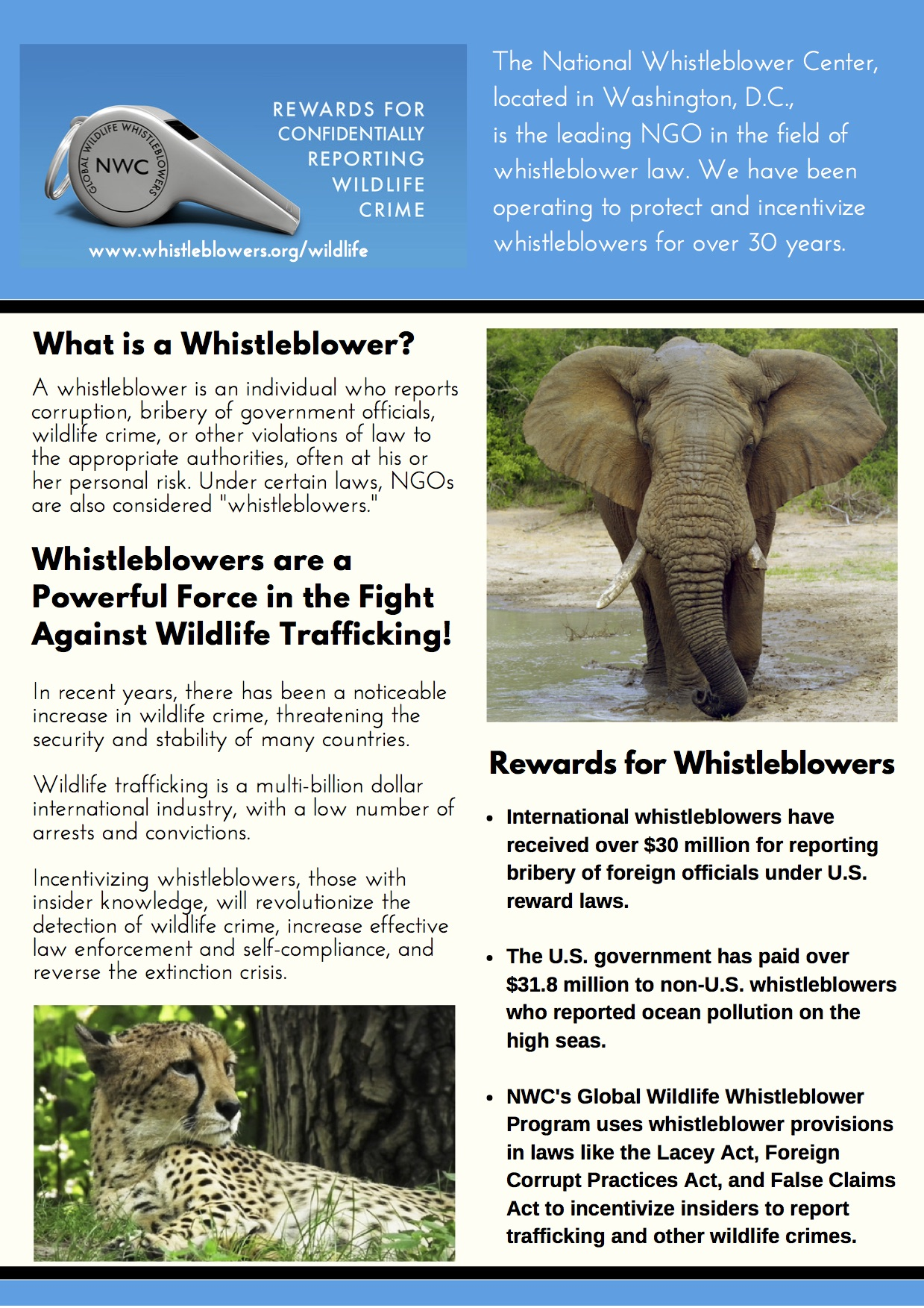 Global Wildlife Whistleblower Program Overview copy